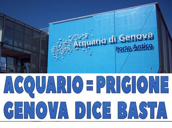 No all'Acquario