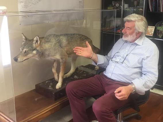 De Paoli: a me i lupi piacciono imbalsamati