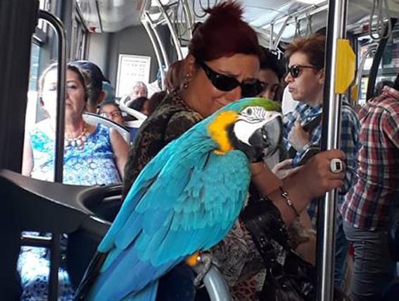 Un pappagallo sul 20